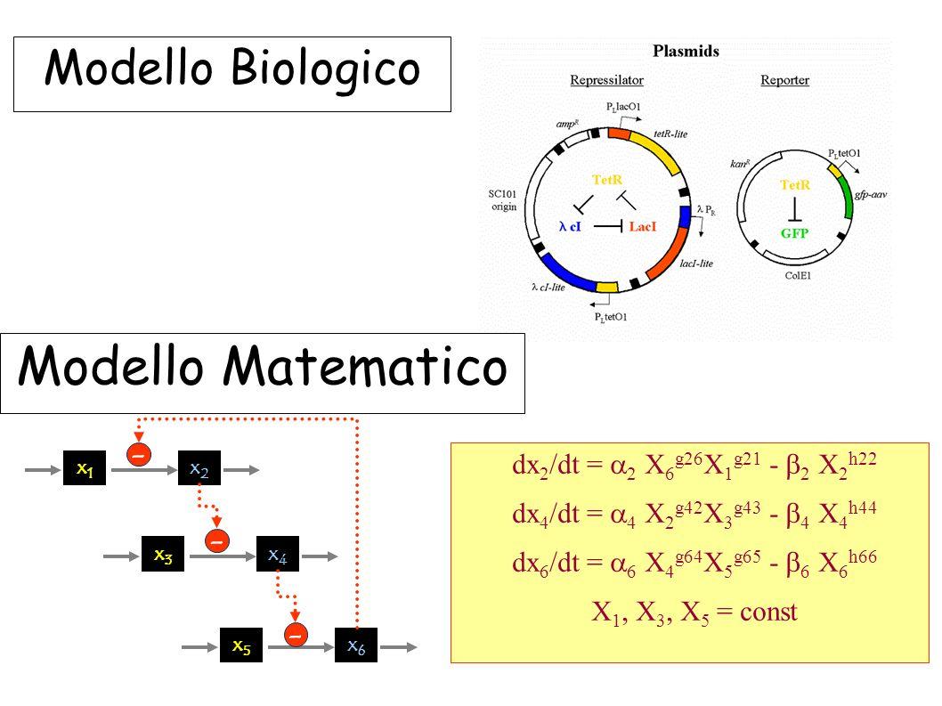 Modello Biologico Modello Matematico x1x1 x2x2 - x3x3 x4x4 - x5x5 x6x6 - dx 2 /dt = 2 X 6 g26 X 1 g21 - 2 X 2 h22 dx 4 /dt = 4 X 2 g42 X 3 g43 - 4 X 4