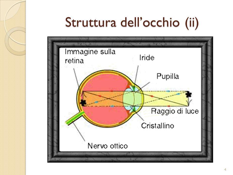 La Fovea È una piccola zona al centro della retina che coglie in modo nitido con dettagli precisi.