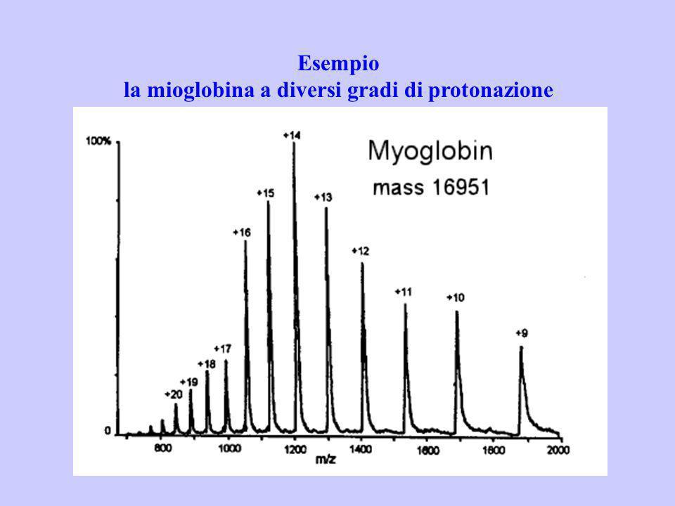 Esempio la mioglobina a diversi gradi di protonazione