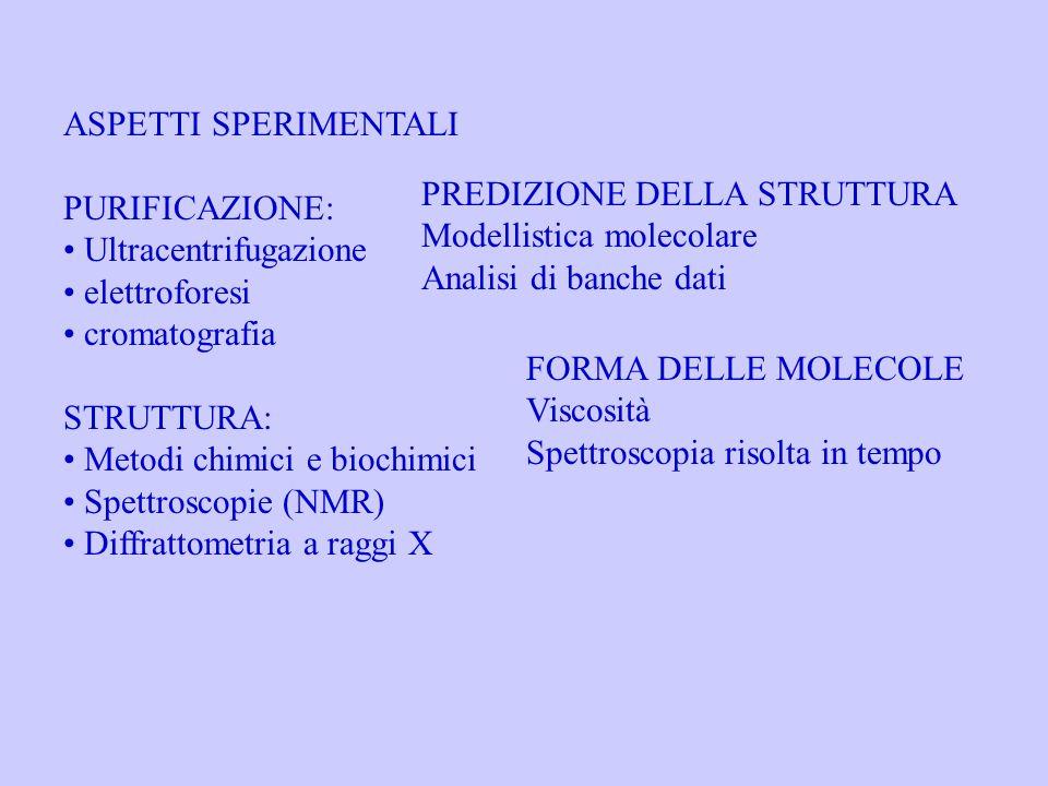 ASPETTI SPERIMENTALI PURIFICAZIONE: Ultracentrifugazione elettroforesi cromatografia STRUTTURA: Metodi chimici e biochimici Spettroscopie (NMR) Diffra