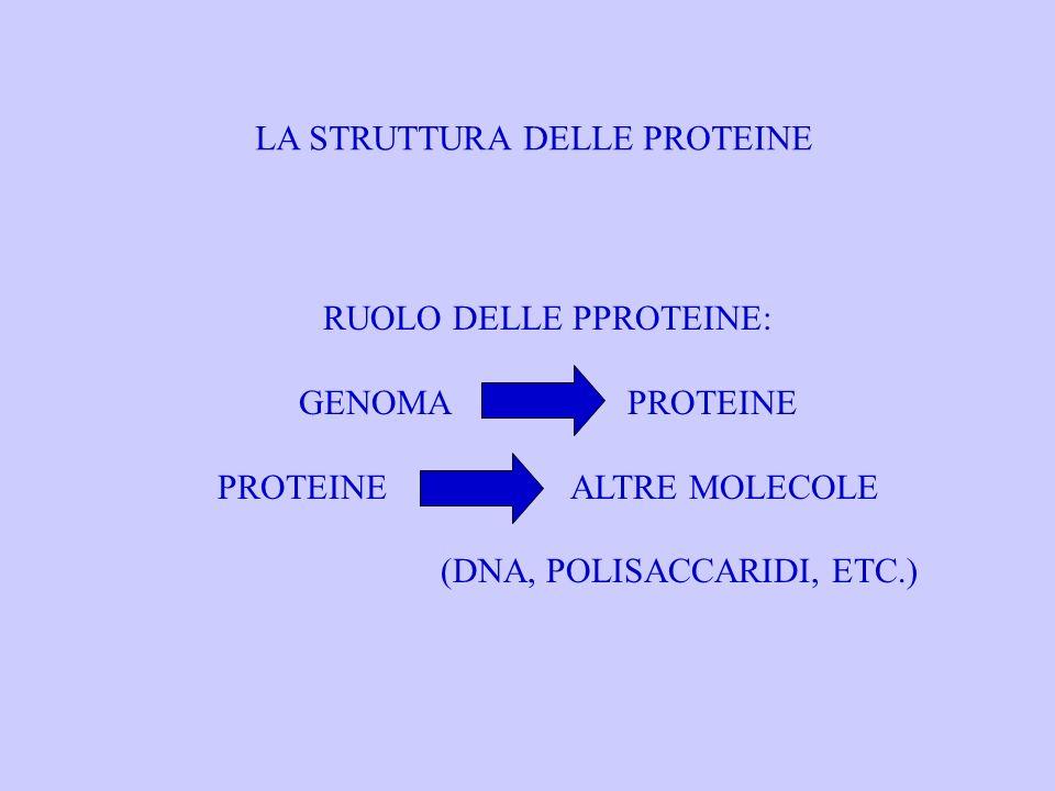LA STRUTTURA DELLE PROTEINE RUOLO DELLE PPROTEINE: GENOMA PROTEINE PROTEINE ALTRE MOLECOLE (DNA, POLISACCARIDI, ETC.)