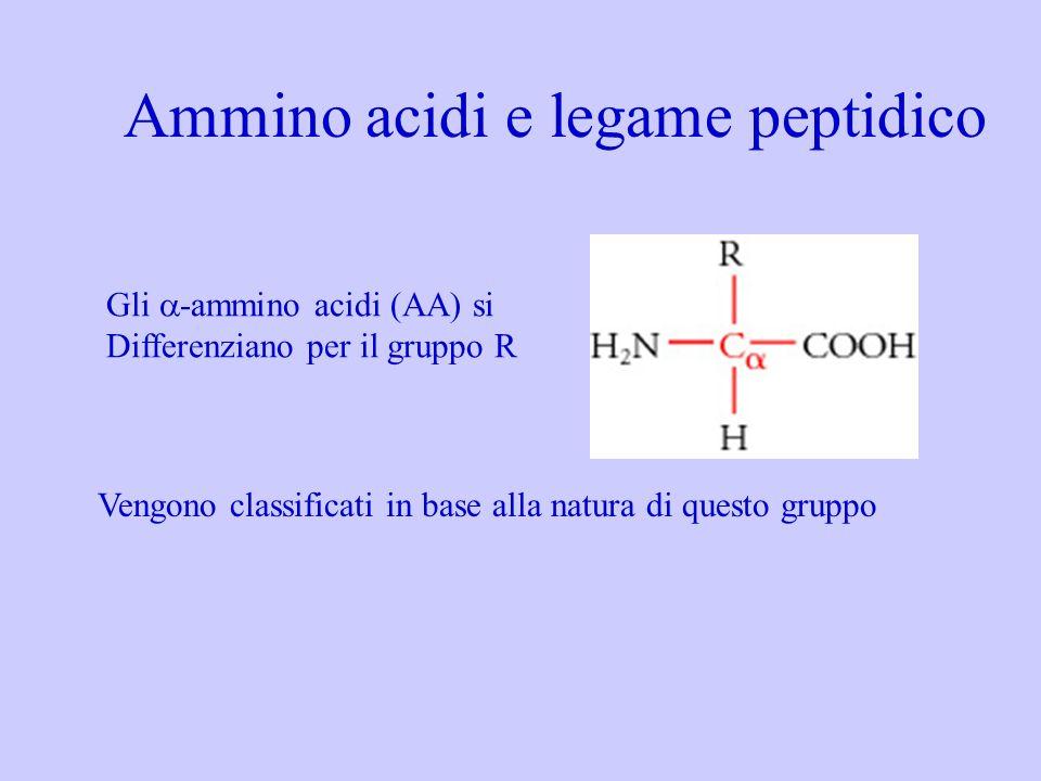 Gli -ammino acidi (AA) si Differenziano per il gruppo R Vengono classificati in base alla natura di questo gruppo Ammino acidi e legame peptidico