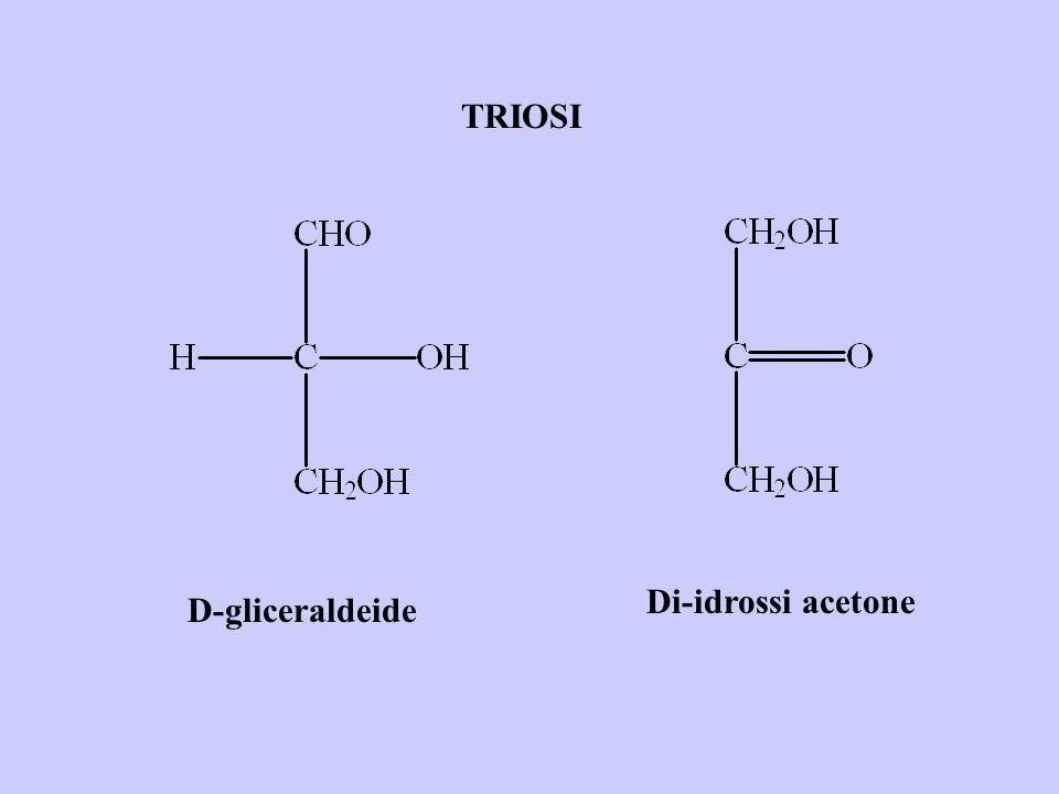 TRIOSI D-gliceraldeide Di-idrossi acetone