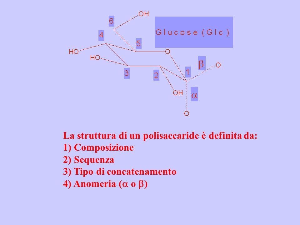 La struttura di un polisaccaride è definita da: 1) Composizione 2) Sequenza 3) Tipo di concatenamento 4) Anomeria ( o )