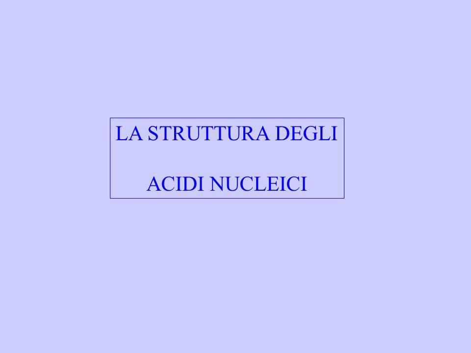 LA STRUTTURA DEGLI ACIDI NUCLEICI