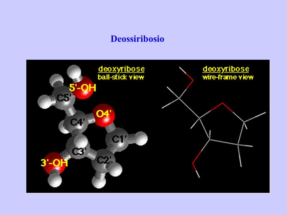 Deossiribosio