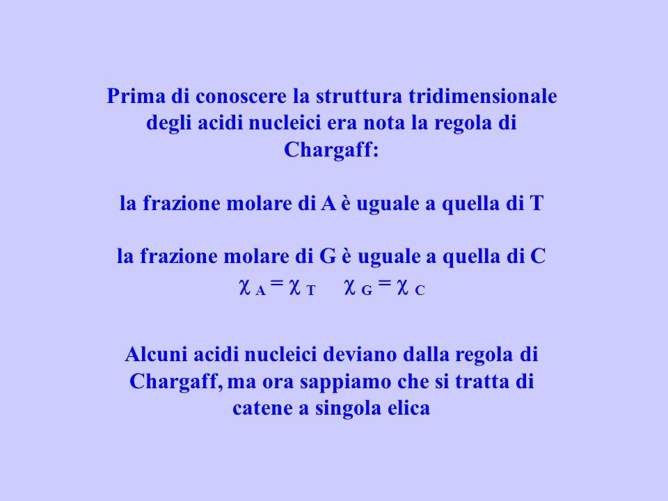 Prima di conoscere la struttura tridimensionale degli acidi nucleici era nota la regola di Chargaff: la frazione molare di A è uguale a quella di T la