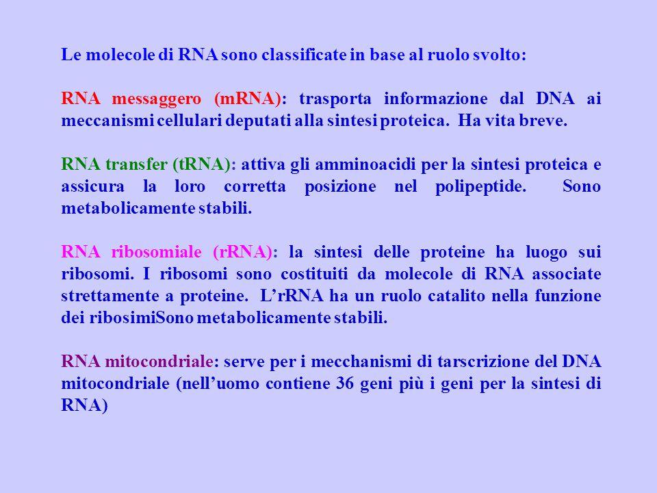 Le molecole di RNA sono classificate in base al ruolo svolto: RNA messaggero (mRNA): trasporta informazione dal DNA ai meccanismi cellulari deputati a