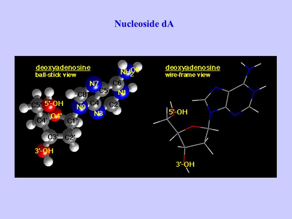 Nucleoside dA