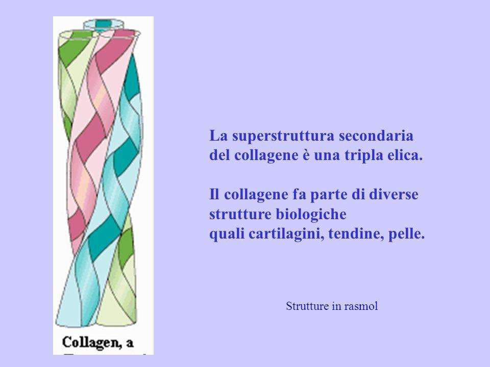 La superstruttura secondaria del collagene è una tripla elica. Il collagene fa parte di diverse strutture biologiche quali cartilagini, tendine, pelle