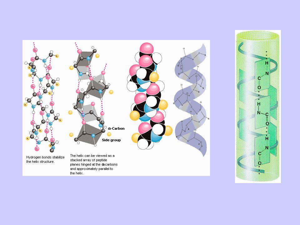 Esempio di struttura di una proteina con alta percentuale di struttura