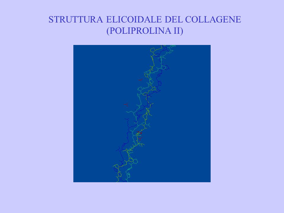 STRUTTURA ELICOIDALE DEL COLLAGENE (POLIPROLINA II)