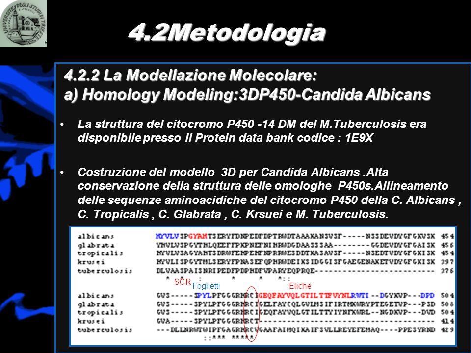La struttura del citocromo P450 -14 DM del M.Tuberculosis era disponibile presso il Protein data bank codice : 1E9X Costruzione del modello 3D per Can