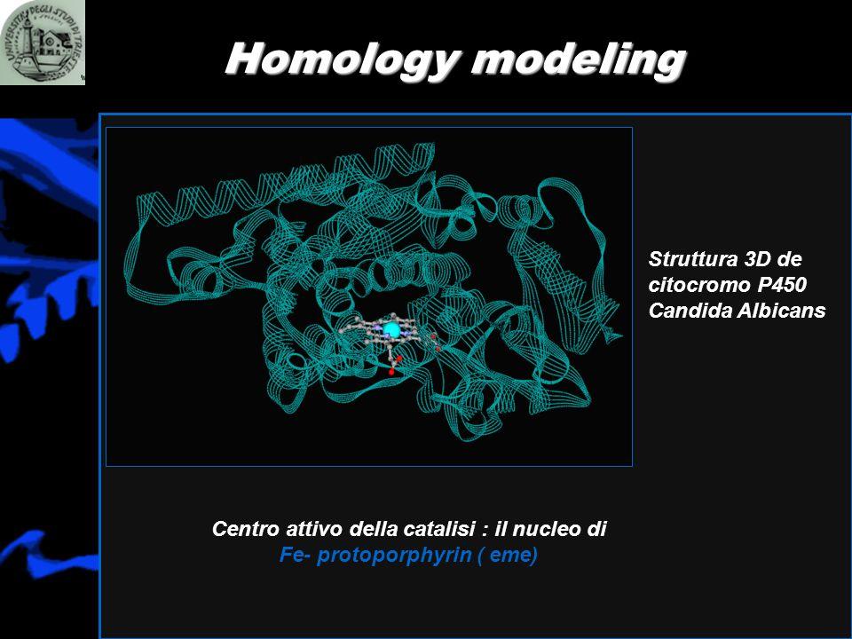 Homology modeling Struttura 3D de citocromo P450 Candida Albicans Centro attivo della catalisi : il nucleo di Fe- protoporphyrin ( eme)