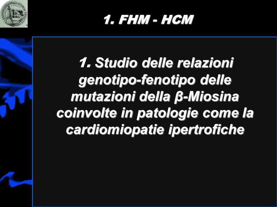 1. FHM - HCM Studio delle relazioni genotipo-fenotipo delle mutazioni della β-Miosina coinvolte in patologie come la cardiomiopatie ipertrofiche 1. St