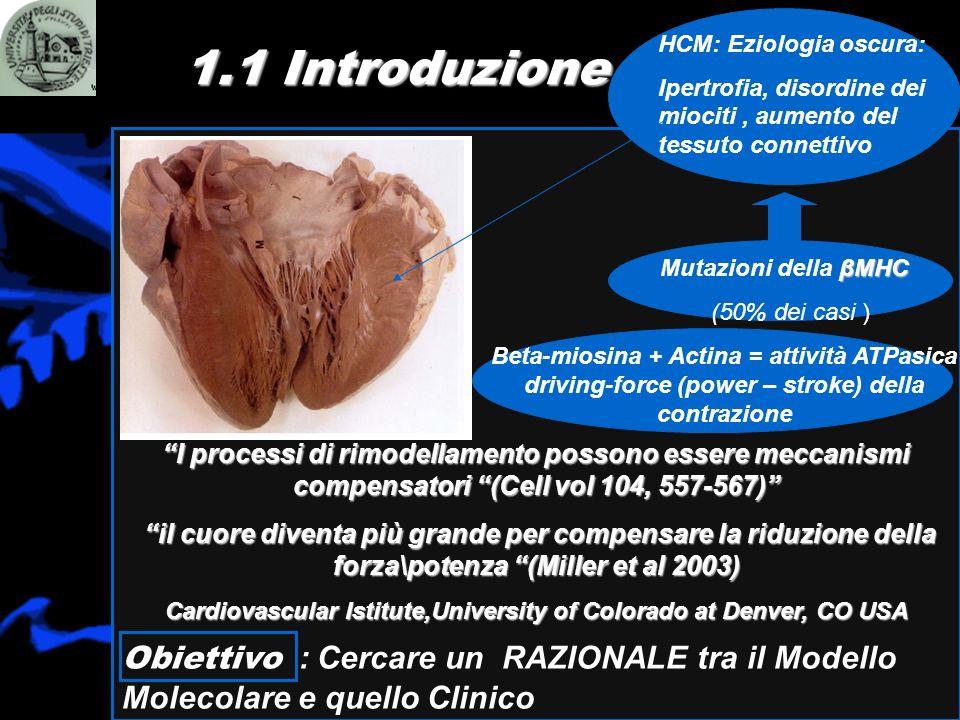1.1 Introduzione Obiettivo : Cercare un RAZIONALE tra il Modello Molecolare e quello Clinico I processi di rimodellamento possono essere meccanismi co