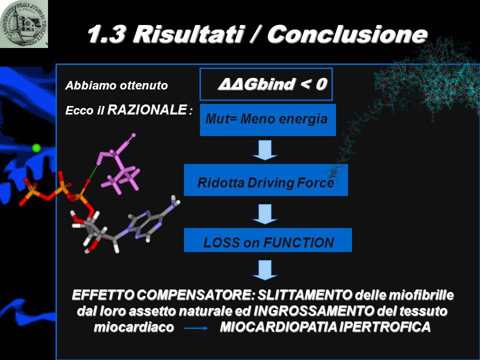 1.3 Risultati / Conclusione ΔΔGbind < 0 Abbiamo ottenuto ΔΔGbind < 0 Ecco il RAZIONALE : Ridotta Driving Force LOSS on FUNCTION EFFETTO COMPENSATORE:
