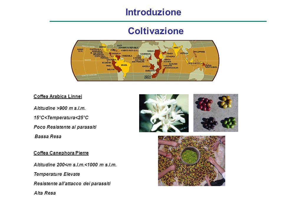 Introduzione Coltivazione Coffea Arabica Linnei Altitudine >900 m s.l.m. 15°C<Temperatura<25°C Poco Resistente ai parassiti Bassa Resa Coffea Canephor
