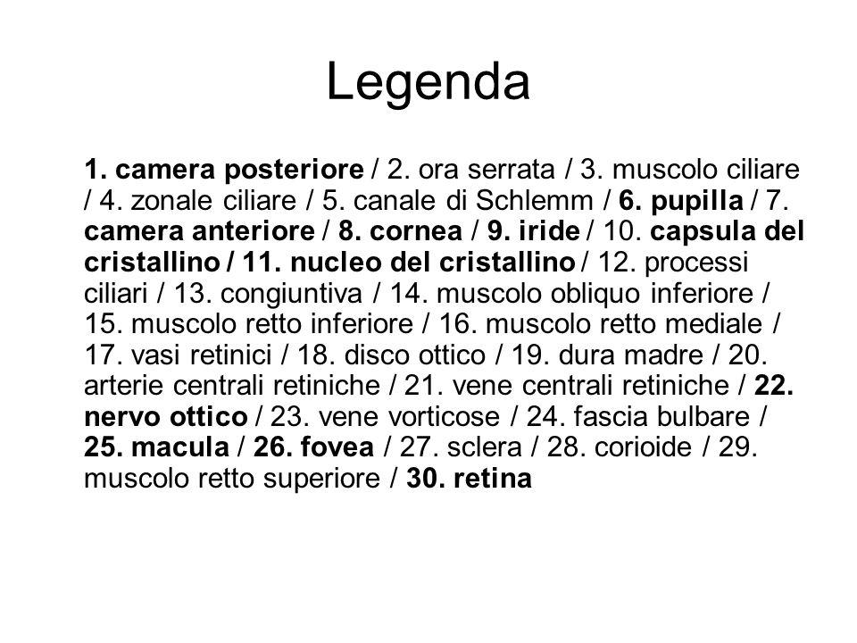 Legenda 1. camera posteriore / 2. ora serrata / 3. muscolo ciliare / 4. zonale ciliare / 5. canale di Schlemm / 6. pupilla / 7. camera anteriore / 8.