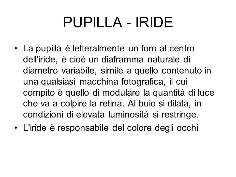 PUPILLA - IRIDE La pupilla è letteralmente un foro al centro dell'iride, è cioè un diaframma naturale di diametro variabile, simile a quello contenuto