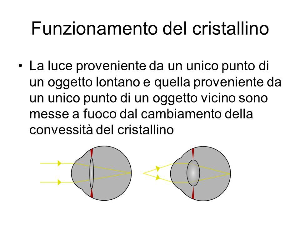 Funzionamento del cristallino La luce proveniente da un unico punto di un oggetto lontano e quella proveniente da un unico punto di un oggetto vicino