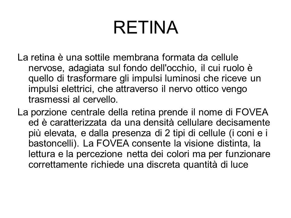 RETINA La retina è una sottile membrana formata da cellule nervose, adagiata sul fondo dell'occhio, il cui ruolo è quello di trasformare gli impulsi l