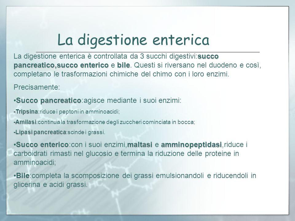 La digestione enterica La digestione enterica è controllata da 3 succhi digestivi:succo pancreatico,succo enterico e b bb bile. Questi si riversano ne