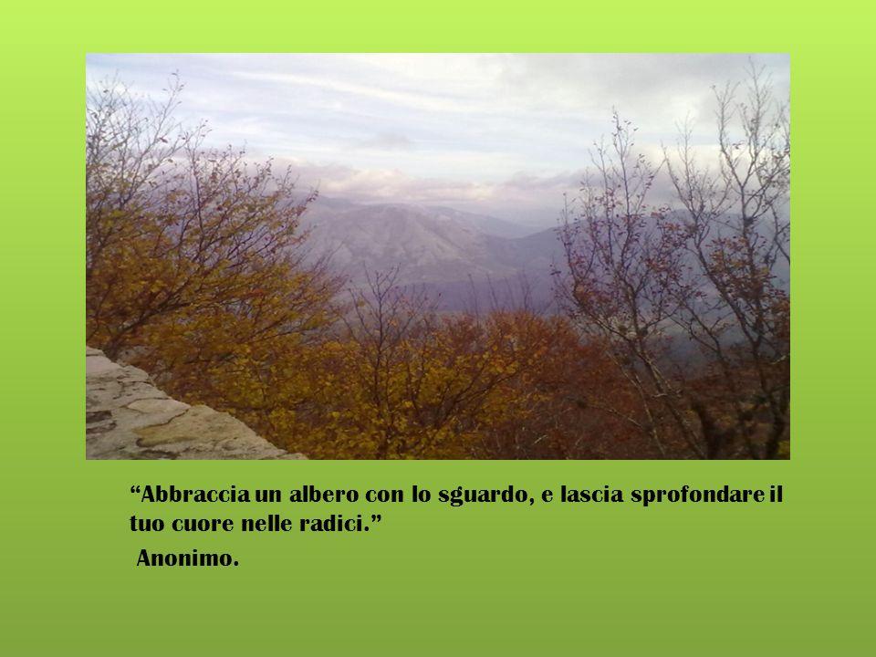 Alla natura si comanda solo ubbidendole. Francis Bacon (1561-1626), filosofo inglese.