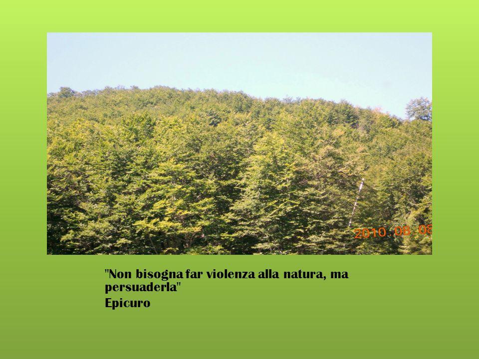 Abbraccia un albero con lo sguardo, e lascia sprofondare il tuo cuore nelle radici. Anonimo.