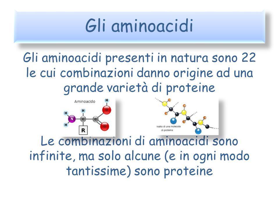 Gli aminoacidi Gli aminoacidi presenti in natura sono 22 le cui combinazioni danno origine ad una grande varietà di proteine Le combinazioni di aminoa