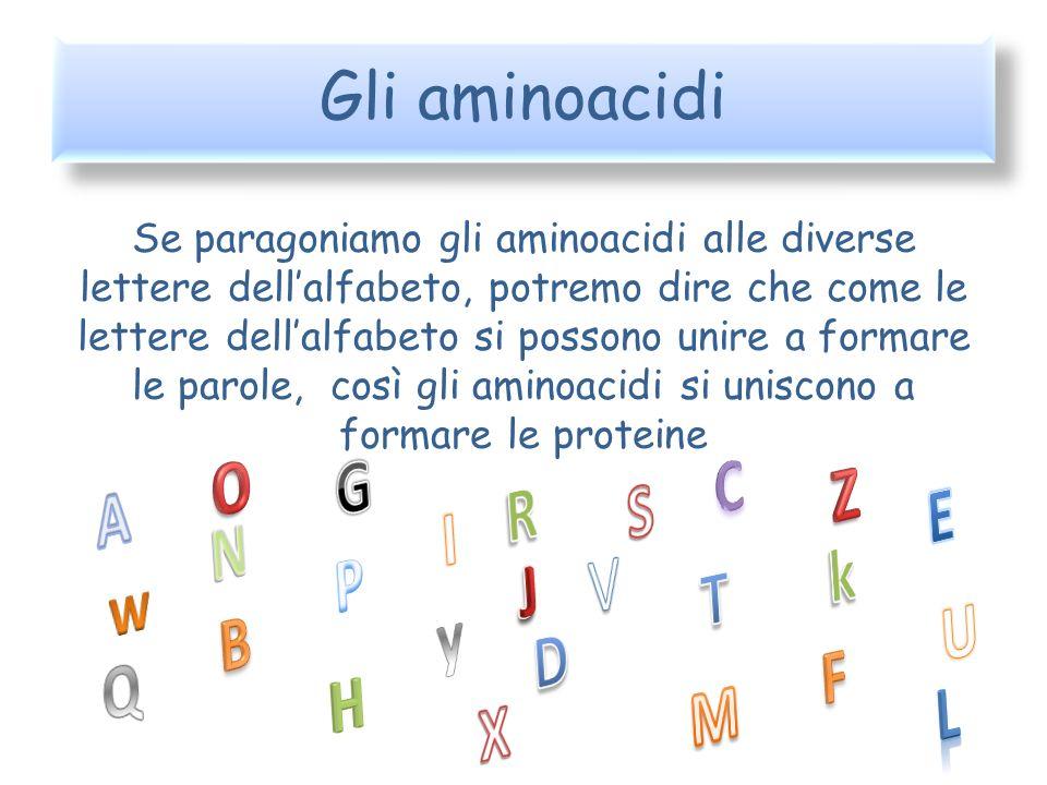 Gli aminoacidi Se paragoniamo gli aminoacidi alle diverse lettere dellalfabeto, potremo dire che come le lettere dellalfabeto si possono unire a forma