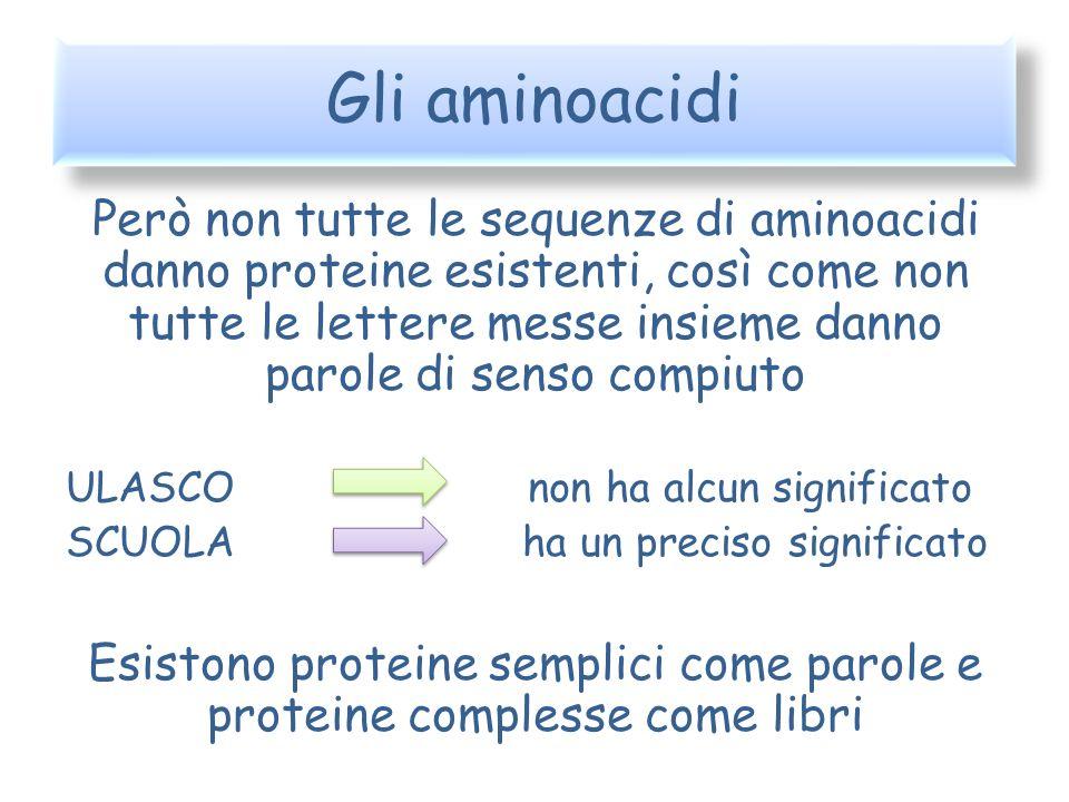 Gli aminoacidi Però non tutte le sequenze di aminoacidi danno proteine esistenti, così come non tutte le lettere messe insieme danno parole di senso c