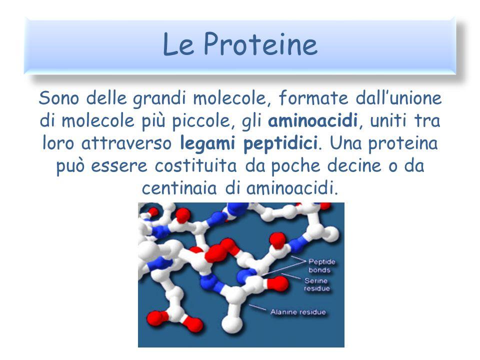 Le Proteine Sono delle grandi molecole, formate dallunione di molecole più piccole, gli aminoacidi, uniti tra loro attraverso legami peptidici. Una pr