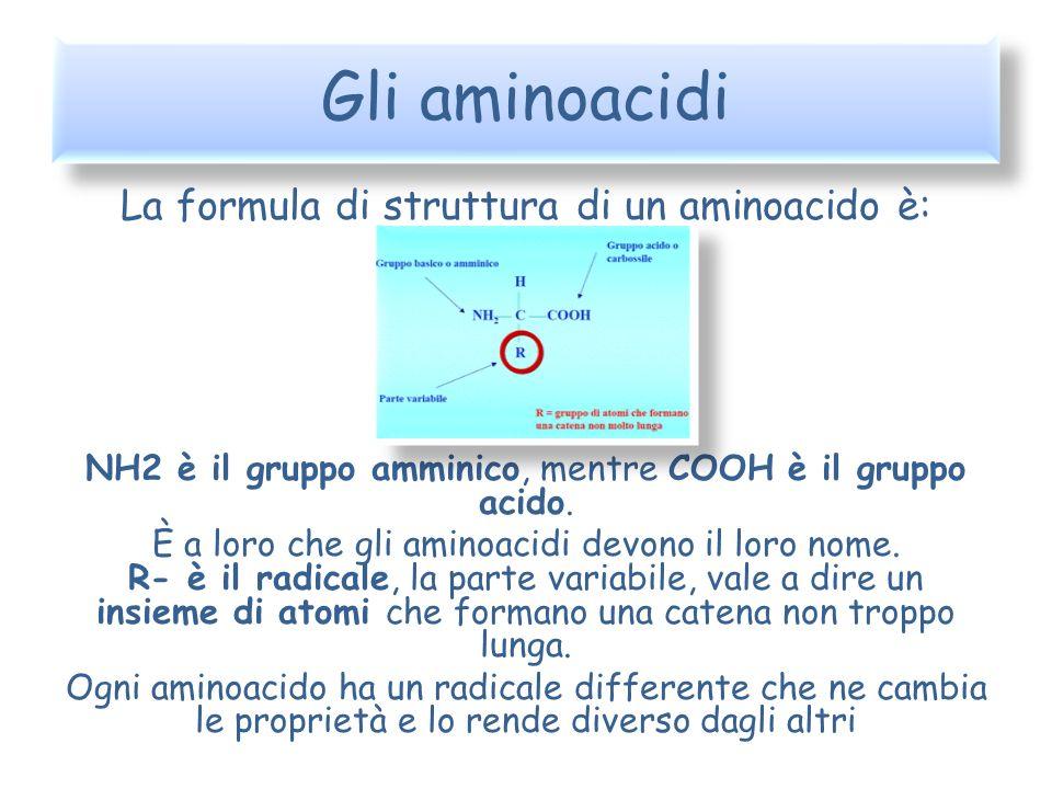 Gli aminoacidi La formula di struttura di un aminoacido è: NH2 è il gruppo amminico, mentre COOH è il gruppo acido. È a loro che gli aminoacidi devono