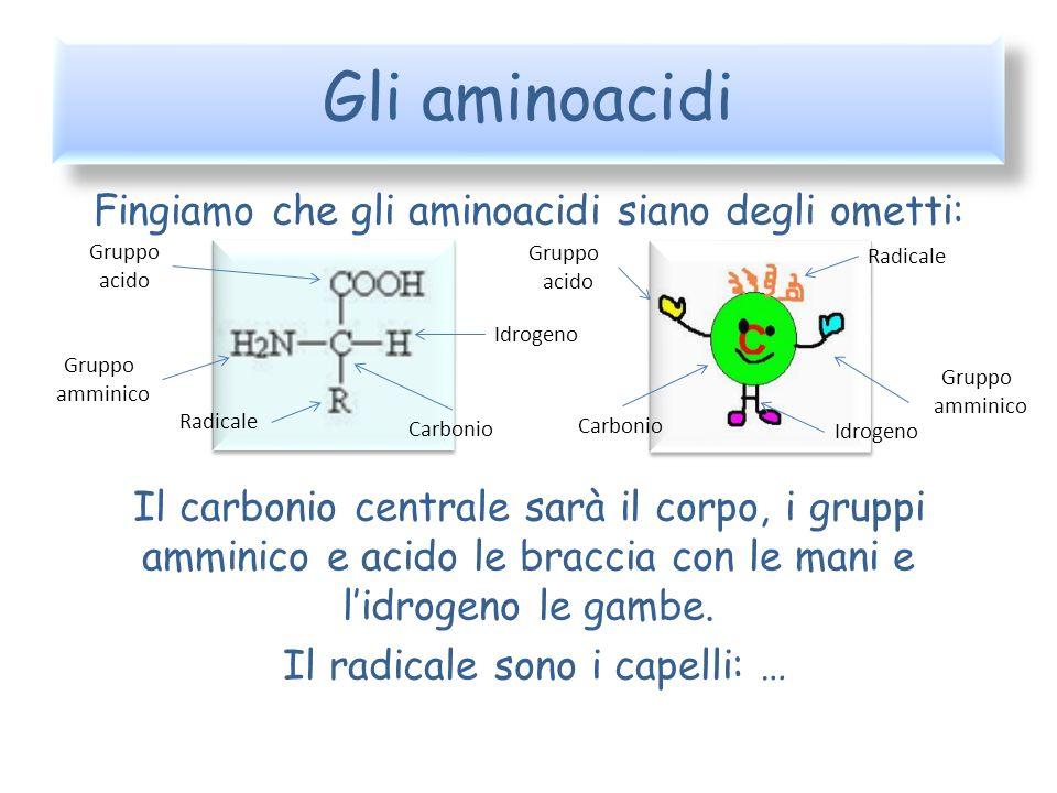 Gli aminoacidi Fingiamo che gli aminoacidi siano degli ometti: Il carbonio centrale sarà il corpo, i gruppi amminico e acido le braccia con le mani e