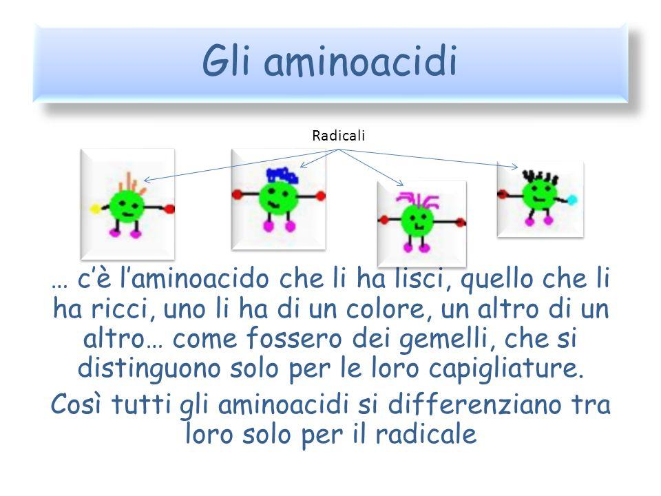 Gli aminoacidi … cè laminoacido che li ha lisci, quello che li ha ricci, uno li ha di un colore, un altro di un altro… come fossero dei gemelli, che s