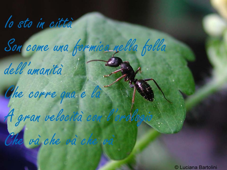 Io sto in città Son come una formica nella folla dellumanità Che corre qua e là A gran velocità con lorologio Che và che và che và