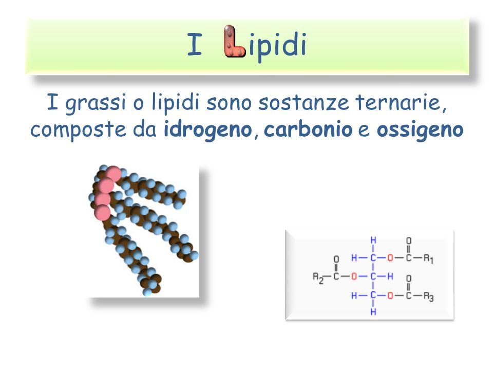 I ipidi I grassi o lipidi sono sostanze ternarie, composte da idrogeno, carbonio e ossigeno