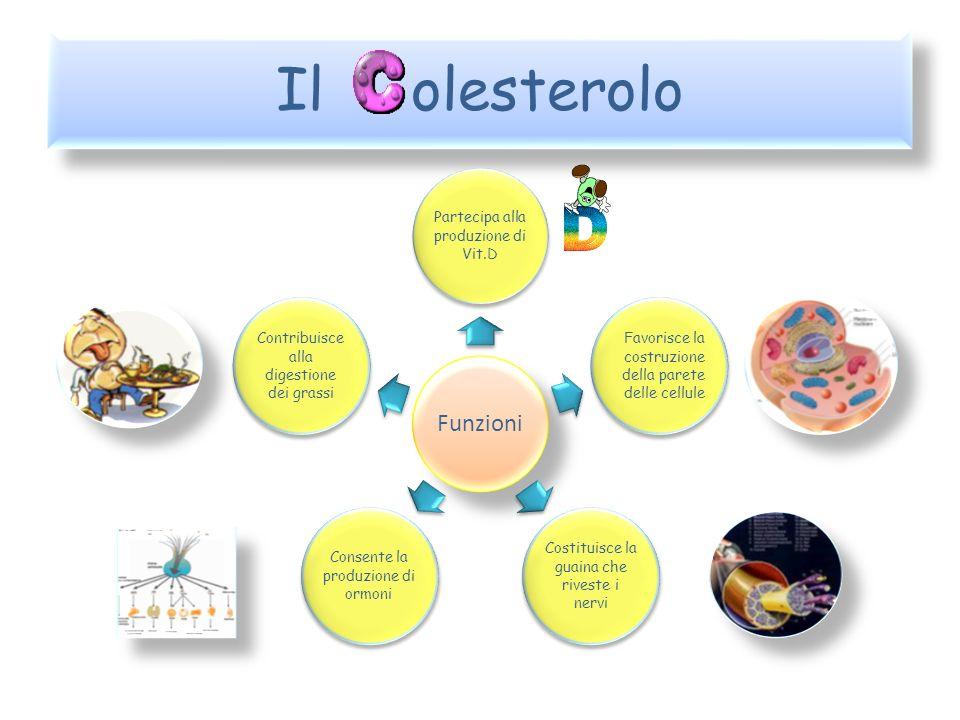 Il olesterolo I grassi assunti con la dieta sono costituiti da Trigliceridi e Colesterolo Colesterolo Trigliceride Glicerolo Acidi grassi Anelli di carbonio Catene laterali