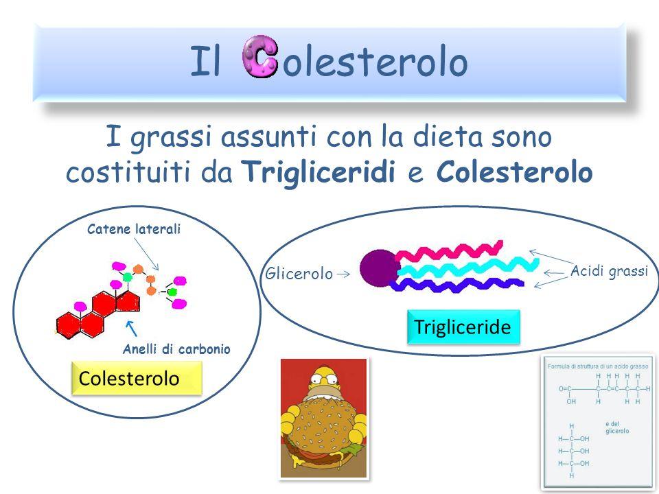 Le Lipoproteine Low Density Lipoprotein Trasportano il colesterolo dal fegato ai tessuti dove viene utilizzato High Density Lipoprotein Recuperano il colesterolo dai tessuti e lo riportano al fegato dove viene metabolizzato cioè trasformato Tessuti
