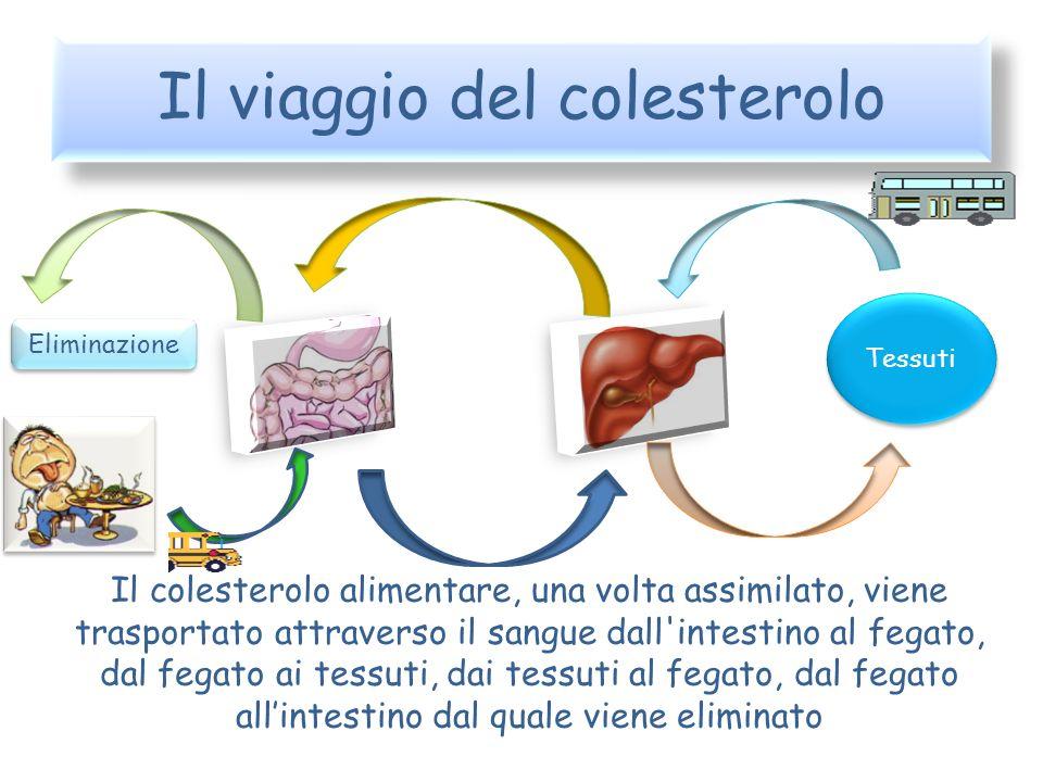Il olesterolo Colesterolo Fegato Alimenti Sangue Viene prodotto dal fegato o assunto con gli alimenti