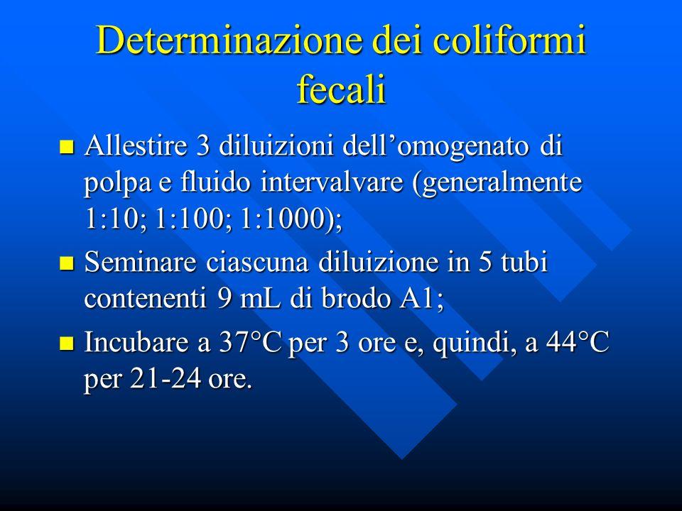 Determinazione dei coliformi fecali Allestire 3 diluizioni dellomogenato di polpa e fluido intervalvare (generalmente 1:10; 1:100; 1:1000); Allestire 3 diluizioni dellomogenato di polpa e fluido intervalvare (generalmente 1:10; 1:100; 1:1000); Seminare ciascuna diluizione in 5 tubi contenenti 9 mL di brodo A1; Seminare ciascuna diluizione in 5 tubi contenenti 9 mL di brodo A1; Incubare a 37°C per 3 ore e, quindi, a 44°C per 21-24 ore.
