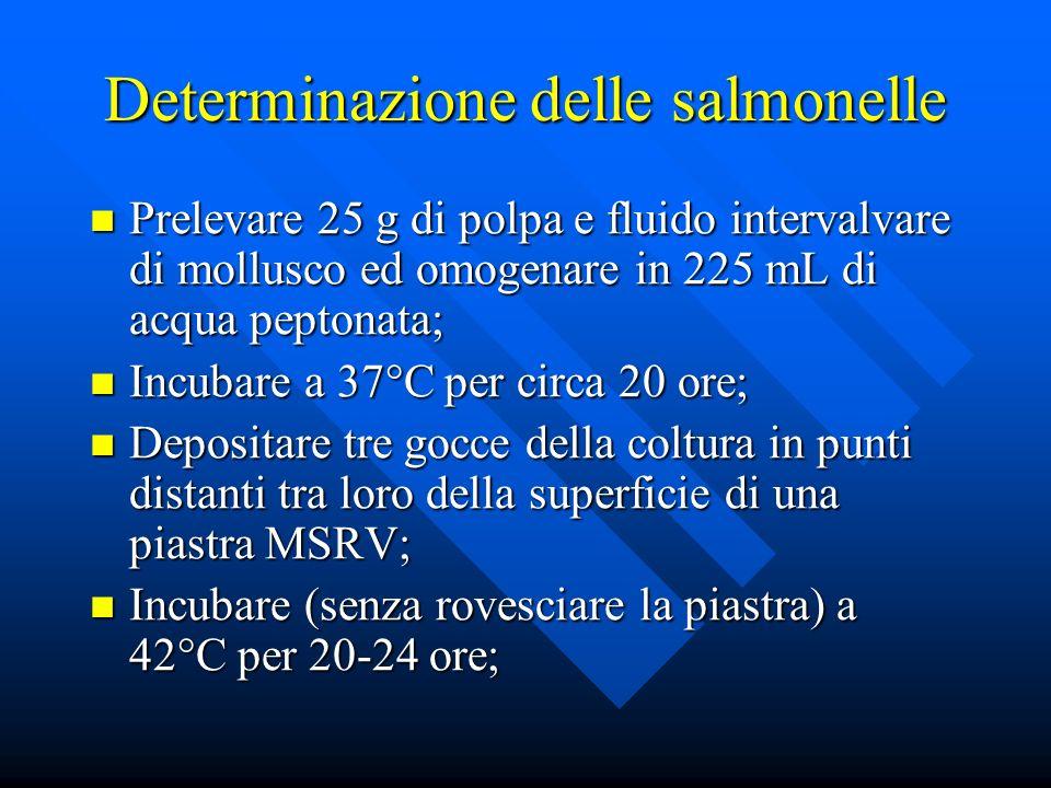 Determinazione delle salmonelle Prelevare 25 g di polpa e fluido intervalvare di mollusco ed omogenare in 225 mL di acqua peptonata; Prelevare 25 g di polpa e fluido intervalvare di mollusco ed omogenare in 225 mL di acqua peptonata; Incubare a 37°C per circa 20 ore; Incubare a 37°C per circa 20 ore; Depositare tre gocce della coltura in punti distanti tra loro della superficie di una piastra MSRV; Depositare tre gocce della coltura in punti distanti tra loro della superficie di una piastra MSRV; Incubare (senza rovesciare la piastra) a 42°C per 20-24 ore; Incubare (senza rovesciare la piastra) a 42°C per 20-24 ore;