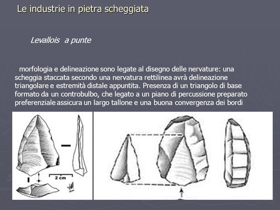 Le industrie in pietra scheggiata Levallois a punte morfologia e delineazione sono legate al disegno delle nervature: una scheggia staccata secondo un