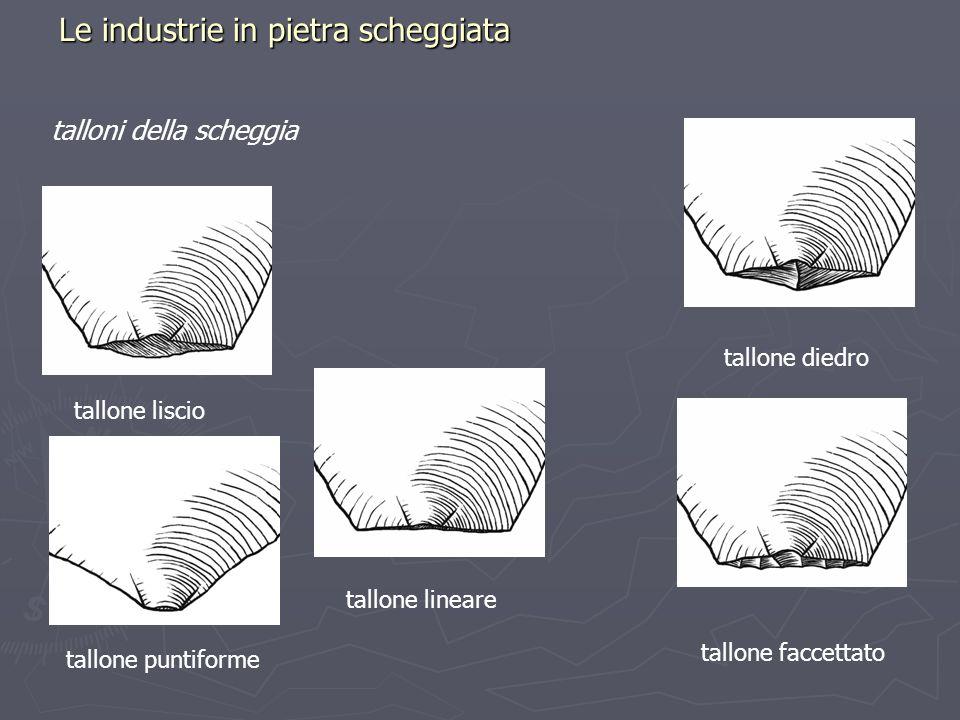 Le industrie in pietra scheggiata talloni della scheggia tallone liscio tallone lineare tallone diedro tallone puntiforme tallone faccettato