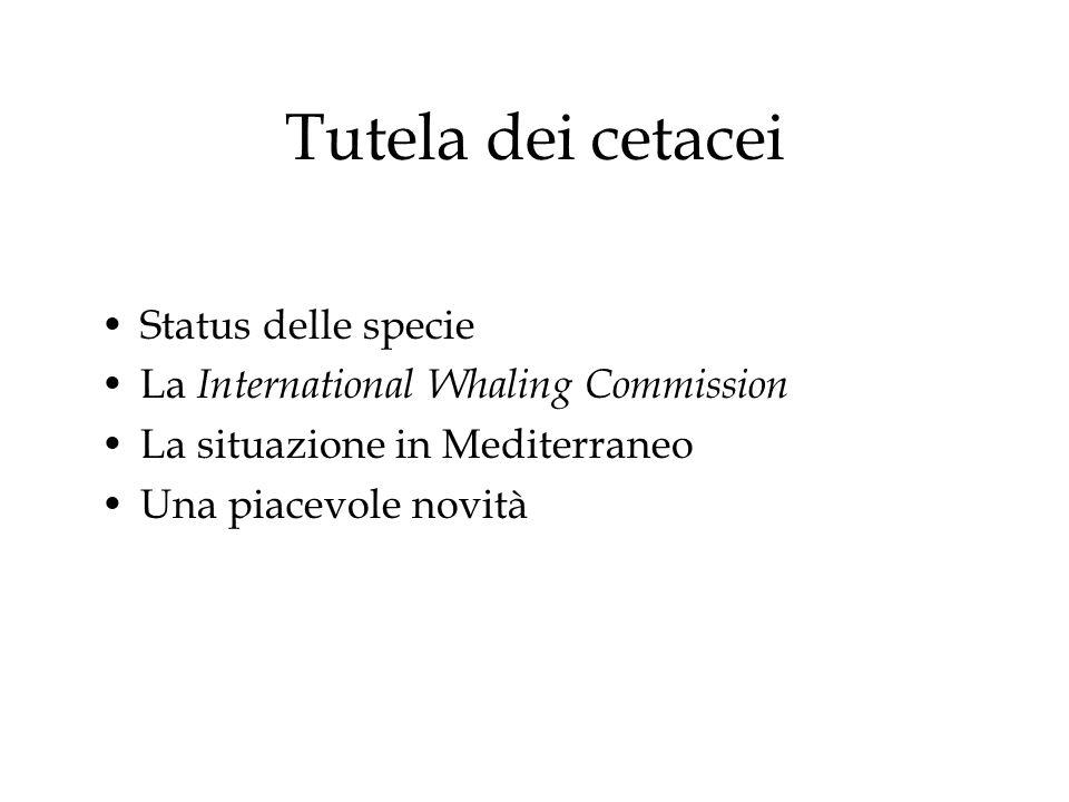 Tutela dei cetacei Status delle specie La International Whaling Commission La situazione in Mediterraneo Una piacevole novità