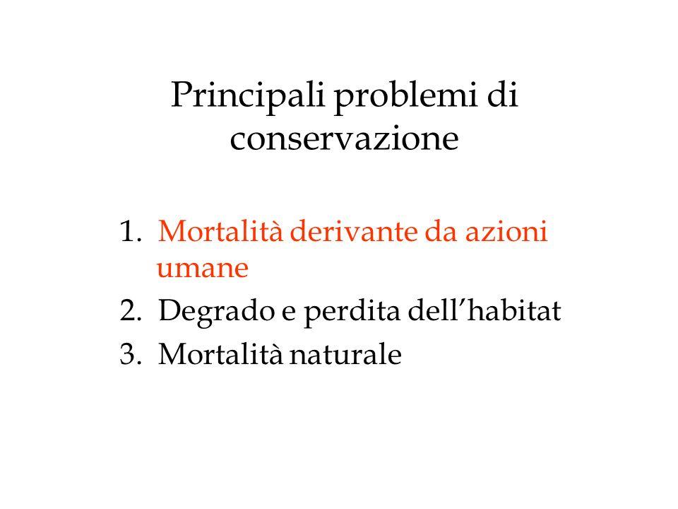 Principali problemi di conservazione 1.Mortalità derivante da azioni umane 2.