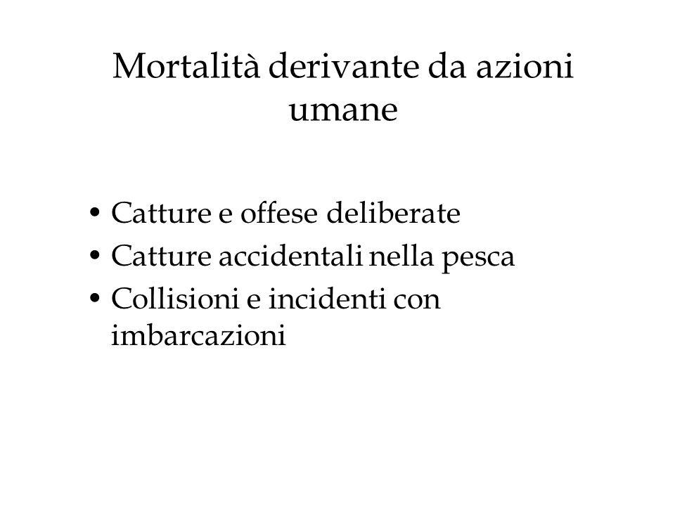 Mortalità derivante da azioni umane Catture e offese deliberate Catture accidentali nella pesca Collisioni e incidenti con imbarcazioni