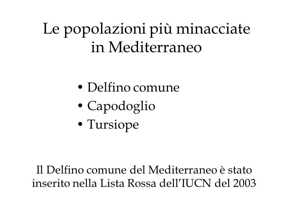 Le popolazioni più minacciate in Mediterraneo Delfino comune Capodoglio Tursiope Il Delfino comune del Mediterraneo è stato inserito nella Lista Rossa dellIUCN del 2003