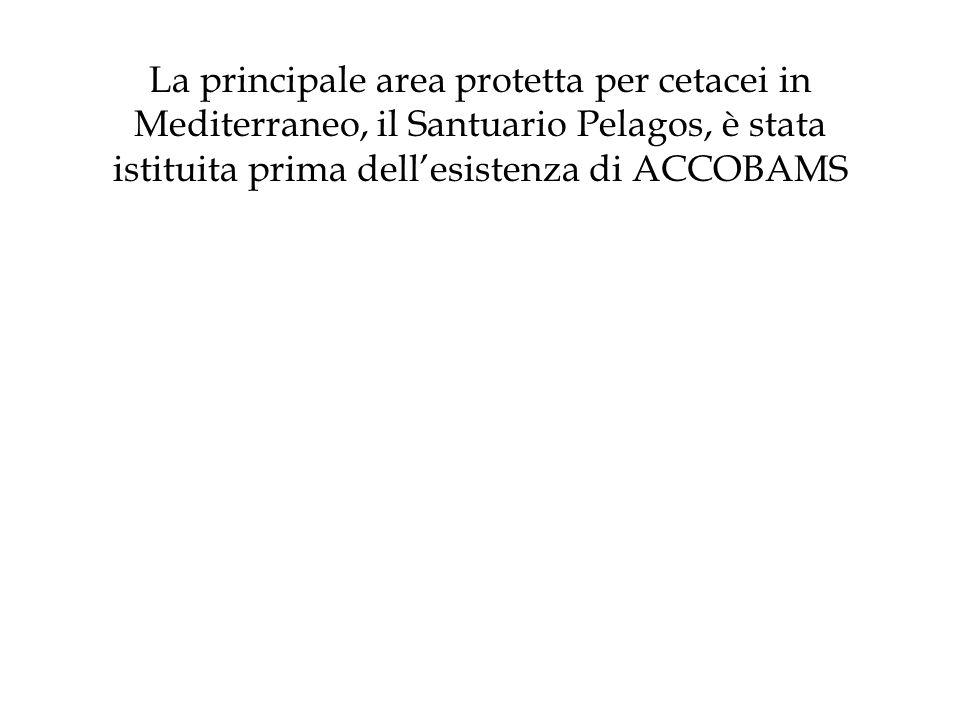 La principale area protetta per cetacei in Mediterraneo, il Santuario Pelagos, è stata istituita prima dellesistenza di ACCOBAMS